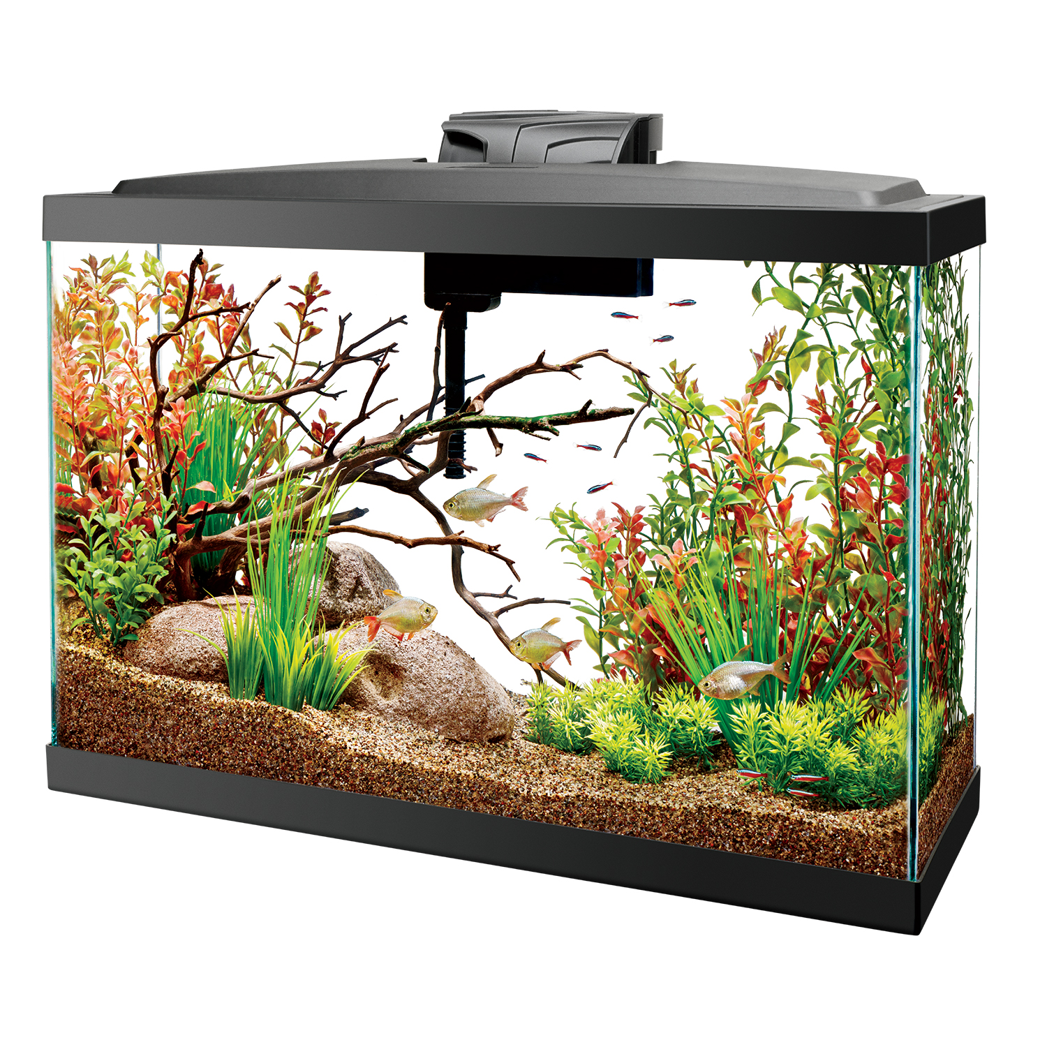 aquarium kits pet world and the aqua shoppe. Black Bedroom Furniture Sets. Home Design Ideas