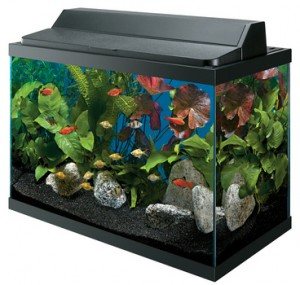 Aqueon Aquarium Kits Available at Pet World Rochester