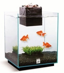 Fluval Chi Aquarium Kits at Pet World Rochester