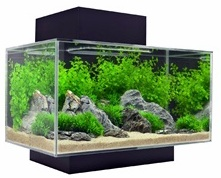 Fluval Edge Aquarium Kits at Pet World, Rochester