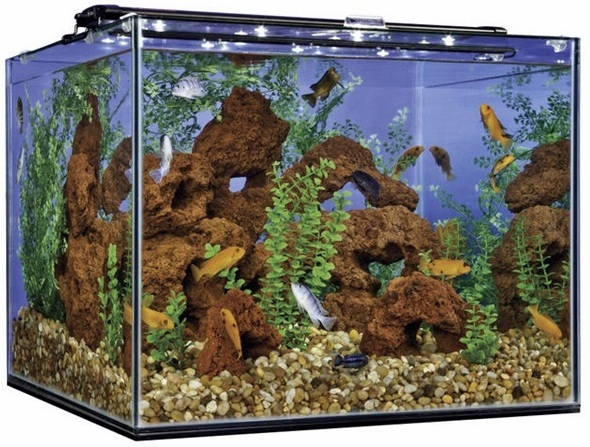 Frameless Cube Aquarium at Pet World, Rochester