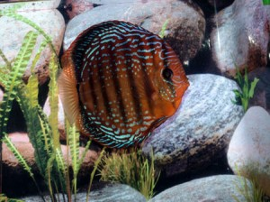 Red Scribbled Discus