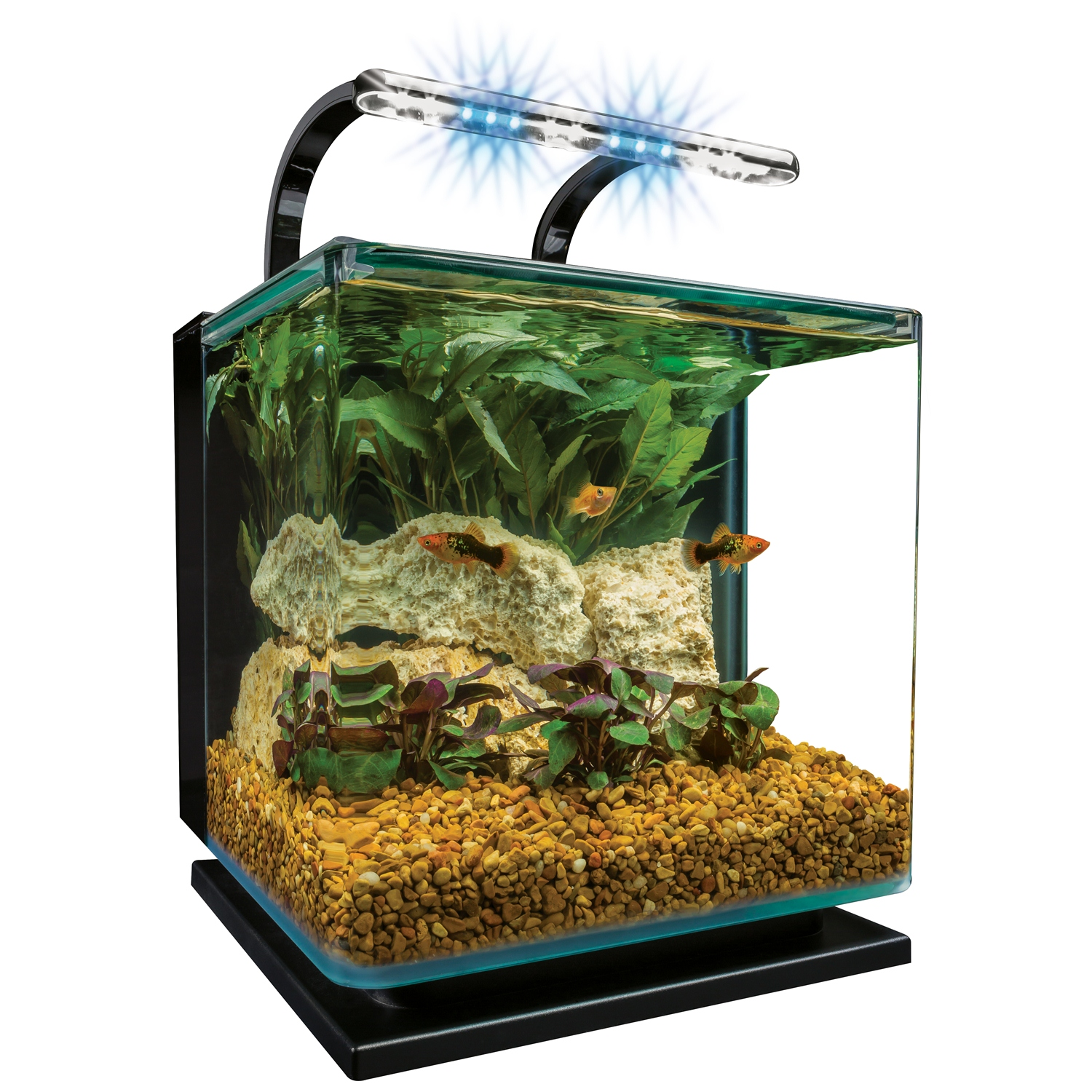 Aquarium fish 5 gallon tank - Marineland Contour 3