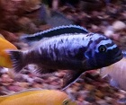 Fish of the Week November 29, 2014