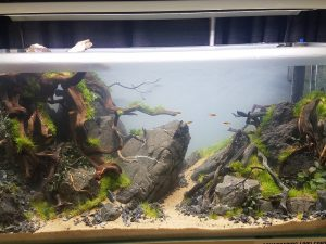 30 Gallon Aquariums: Aquarium Aquascaping