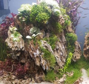 Aquascaping Ideas